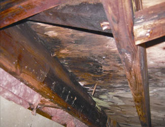 mold and rot in a Springfield crawl space