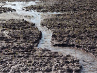 Water washing away mud and sediment in rainy weather.